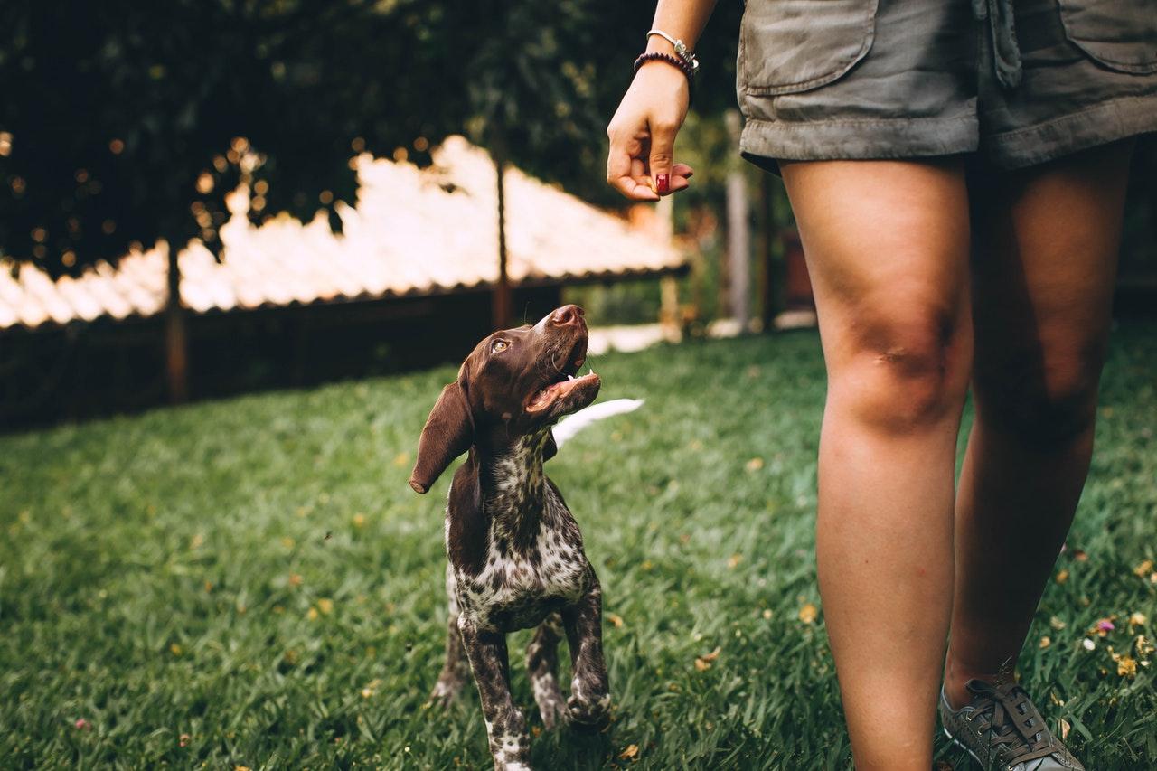 Zachowania psa, czyli co pupil chce nam powiedzieć swoim zachowaniem