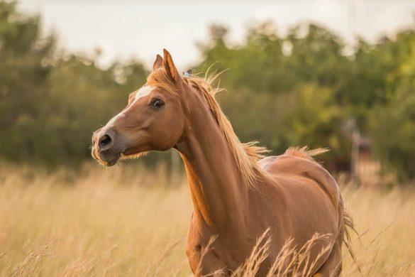Kalosze dla konia – kiedy warto je stosować?