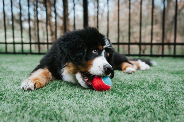 Piłki dla psów